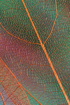 Folhas de outono abstratas bonitas com veias alaranjadas
