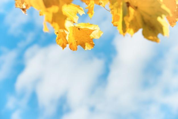 Folhas de outono amarelas com céu azul e nuvens brancas no fundo