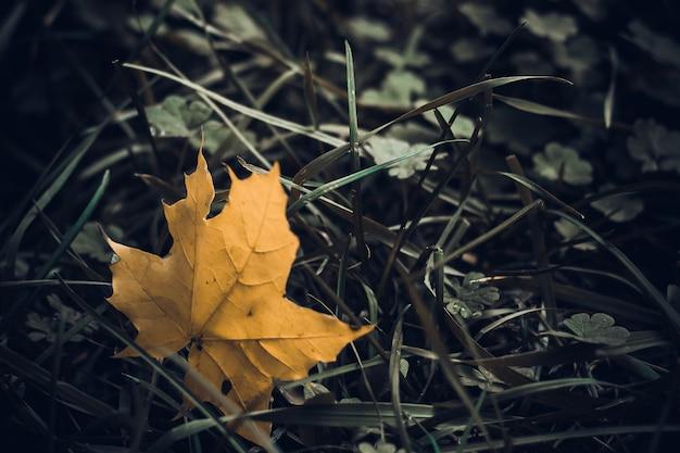 Folhas de outono amarelas e vermelhas. fundo bonito.