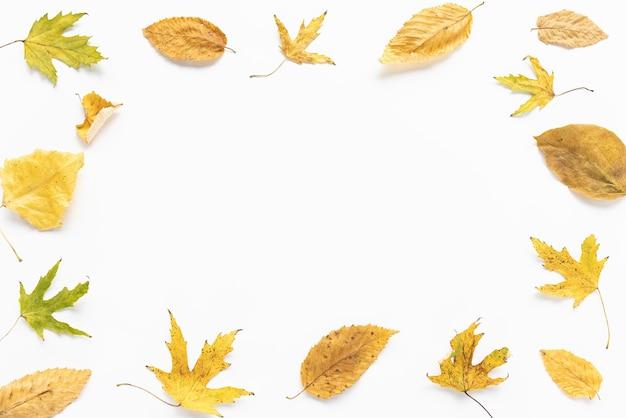 Folhas de outono amarelas em fundo branco layout de quadro de outono conceito de outono espaço de cópia