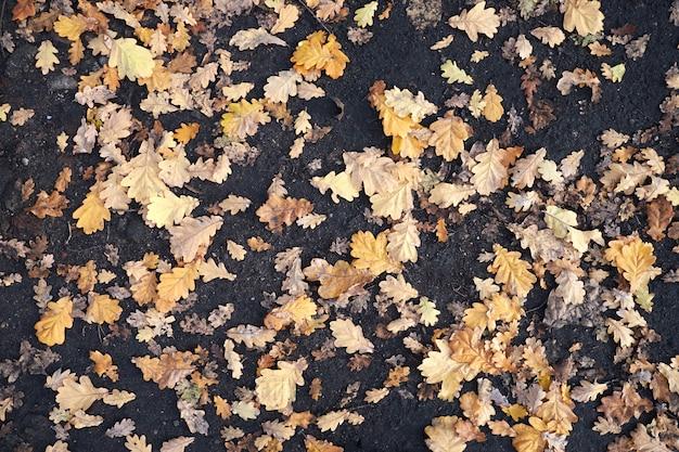 Folhas de outono amarelas estão no chão.