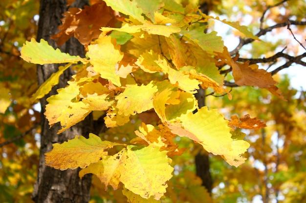 Folhas de outono, amarelo e vermelho lindo tempo nas árvores.
