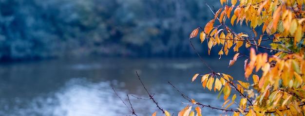 Folhas de outono amarelo-laranja brilhantes em um fundo de rio azul, panorama Foto Premium
