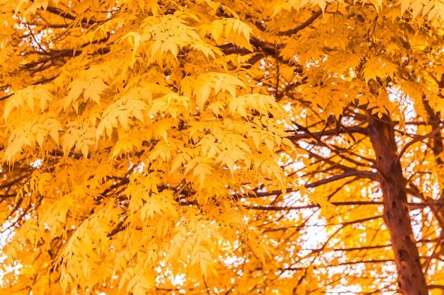 Folhas de outono amarelo na floresta