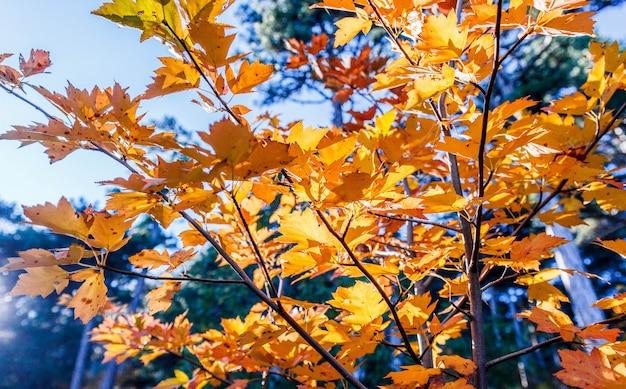 Folhas de outono bonitas, floresta de outono nas montanhas