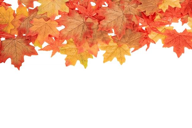 Folhas de outono bordo colorido vista superior em branco isolado, conceito de outono