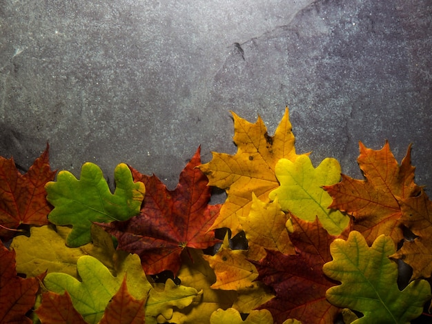 Folhas de outono brilhantes em um fundo cinza de concreto com lugar para texto