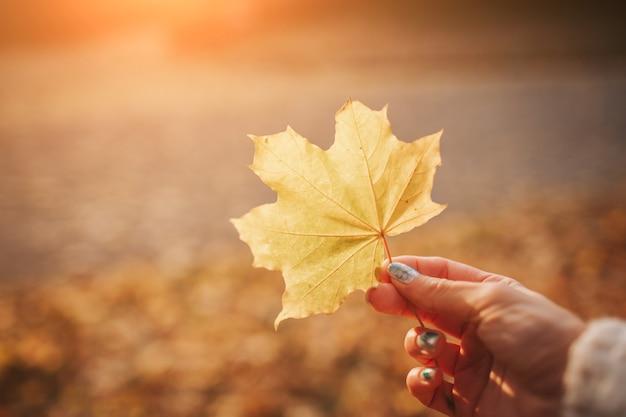 Folhas de outono brilhantes em um parque