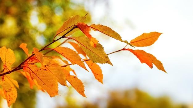 Folhas de outono brilhantes na floresta sobre um fundo claro em cores quentes