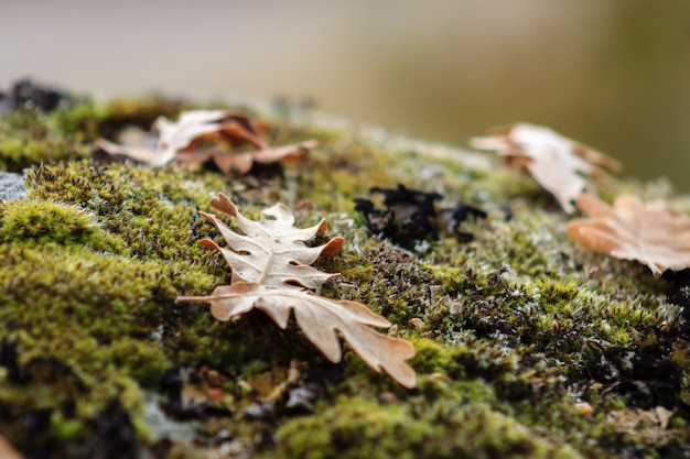 Folhas de outono caídas na floresta