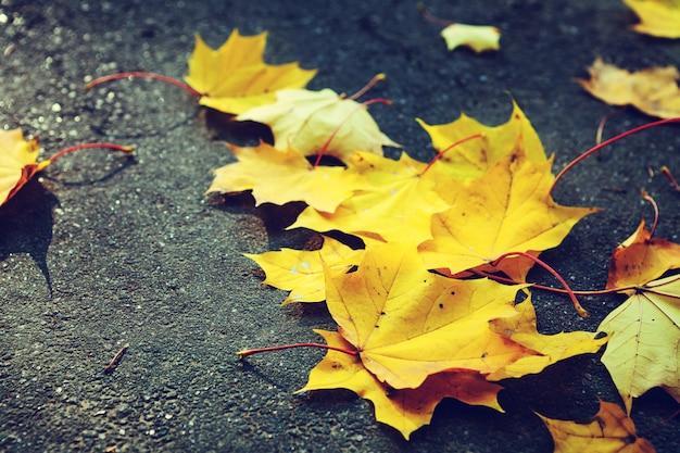 Folhas de outono caídas na grama na luz da manhã ensolarada, foto tonificada