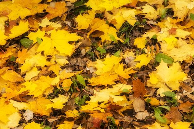 Folhas de outono caídas