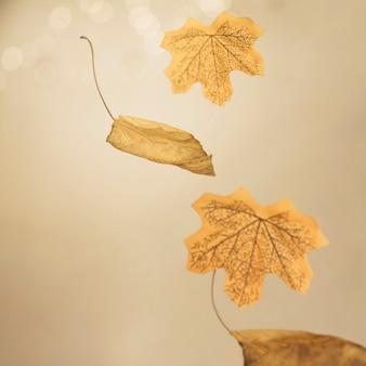 Folhas de outono caindo dispostas