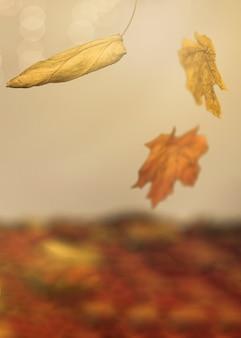 Folhas de outono caindo na superfície multicolorida