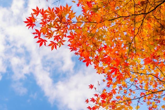 Folhas de outono coloridas bonitas