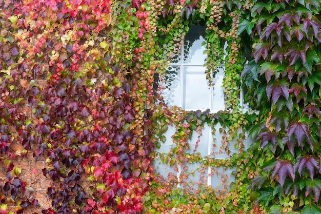 Folhas de outono coloridas com foco seletivo, textura de folhas de outono