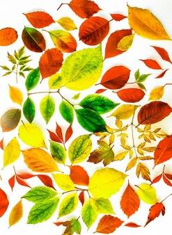 Folhas de outono coloridas em um fundo branco