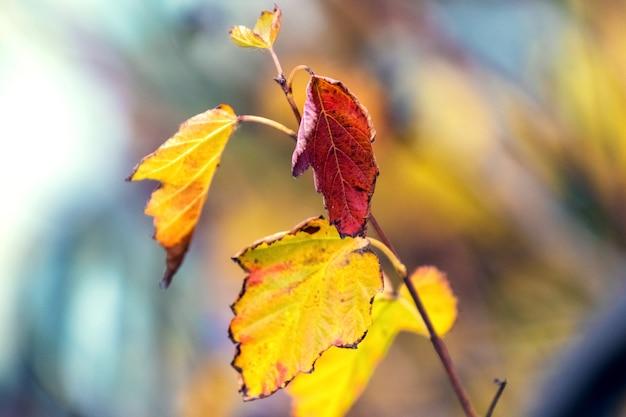 Folhas de outono coloridas em um fundo desfocado em cores quentes
