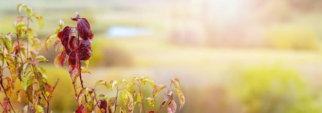 Folhas de outono coloridas em um fundo desfocado perto do rio à luz do sol