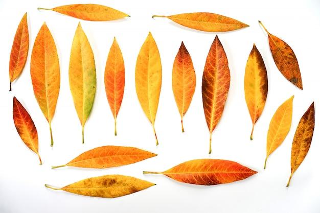 Folhas de outono coloridas isoladas no fundo branco.