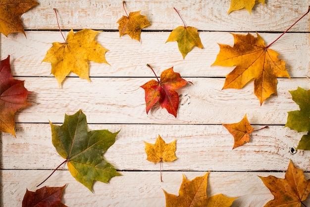 Folhas de outono coloridas na madeira