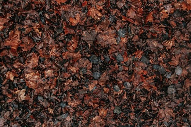 Folhas de outono coloridas no chão molhado após a chuva temporada de outono sai em uma poça de chuva cinza não ...