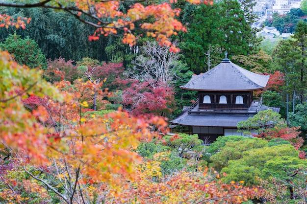 Folhas de outono coloridas no jardim