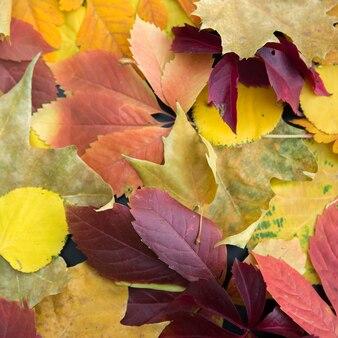 Folhas de outono coloridas que colocam na terra.