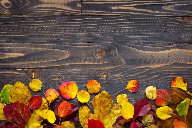 Folhas de outono coloridas, sobre um fundo de madeira