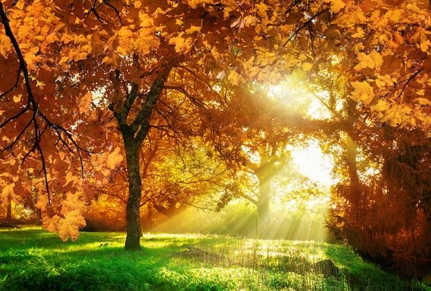 Folhas de outono com floresta na transilvânia, romênia.