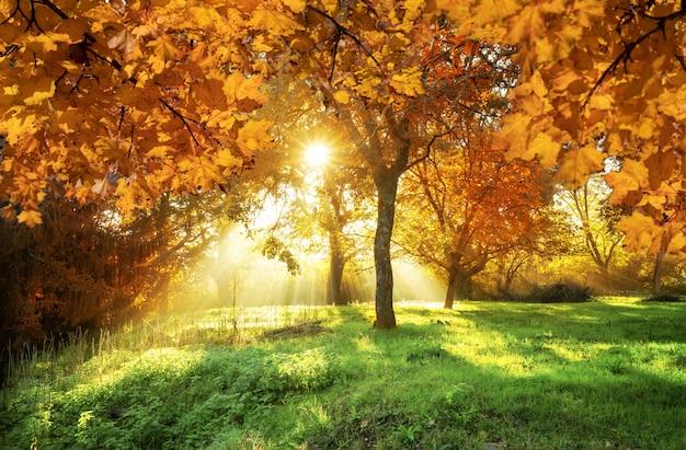 Folhas de outono com floresta no fundo na transilvânia, romênia
