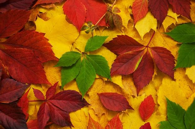 Folhas de outono como pano de fundo