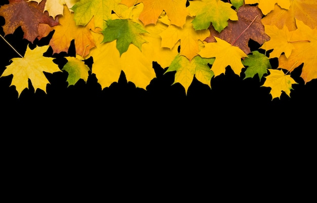 Folhas de outono contra a superfície preta