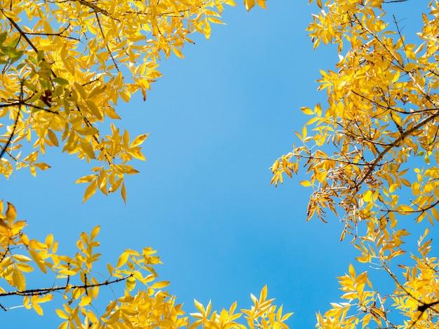 Folhas de outono contra o céu azul