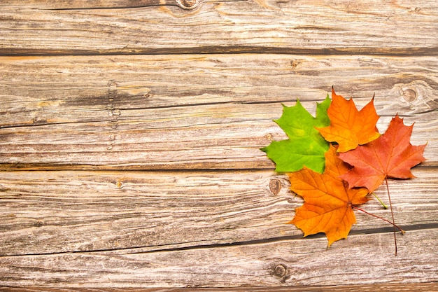 Folhas de outono de bordo vermelho, amarelo e verde em um fundo de madeira. com espaço de cópia