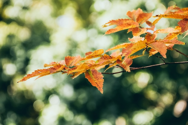 Folhas de outono de fundo no japão