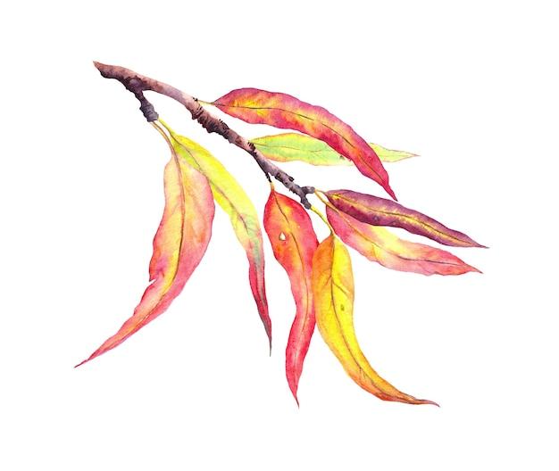 Folhas de outono decorativas vermelhas e amarelas no galho.