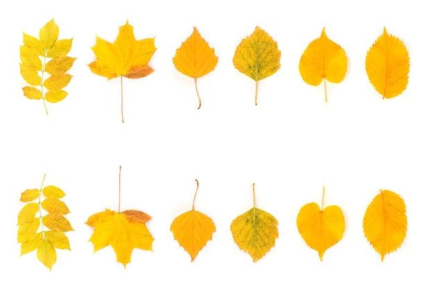 Folhas de outono diferentes em fundo branco