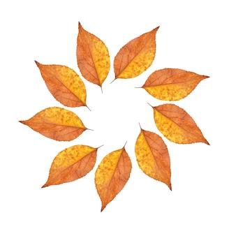 Folhas de outono dispostas em um círculo isolado em um fundo branco