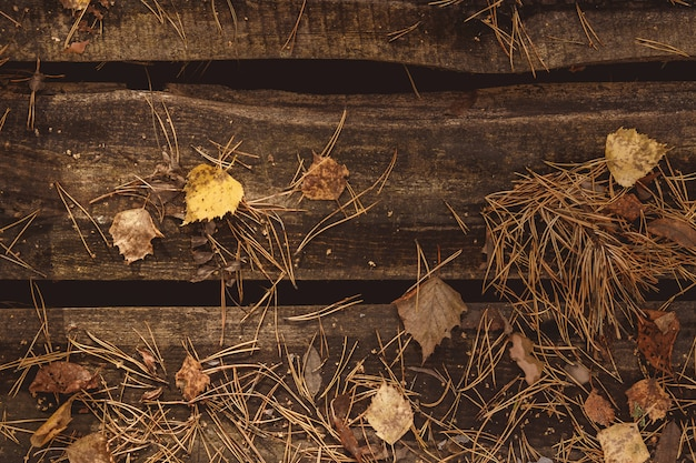 Folhas de outono e abeto sobre fundo de madeira. com espaço de cópia