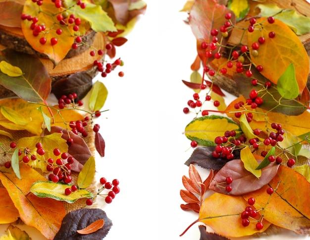 Folhas de outono e bordas de bagas soladas em branco
