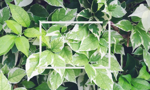 Folhas de outono e buganvílias