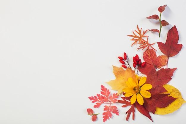 Folhas de outono e flores em branco