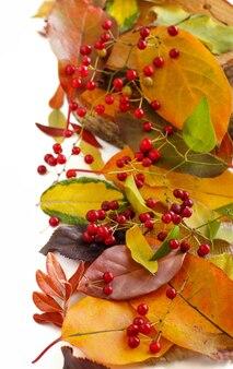 Folhas de outono e frutos isolados no branco