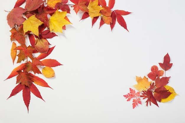 Folhas de outono em branco