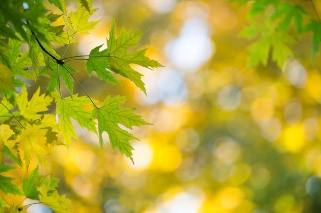 Folhas de outono em dia ensolarado