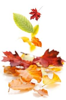 Folhas de outono em fundo branco