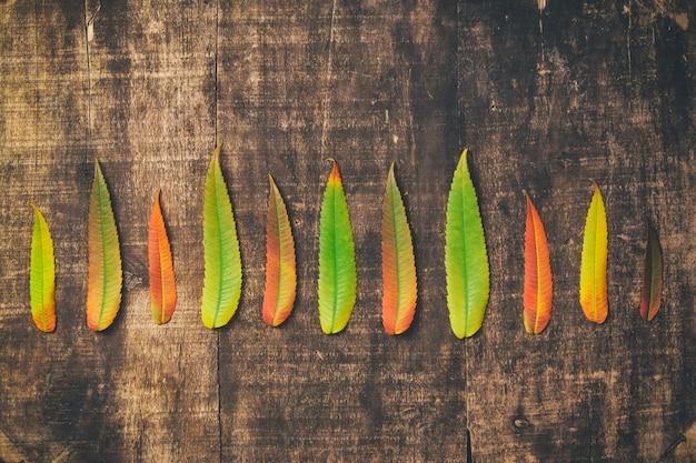 Folhas de outono em fundo de madeira velha. fundo de outono,
