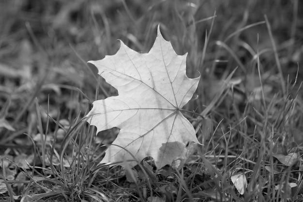 Folhas de outono em gras