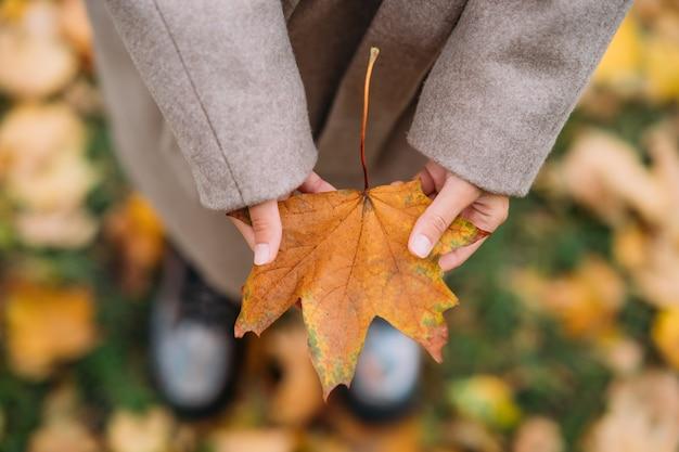 Folhas de outono em mãos de menina fecham a vista